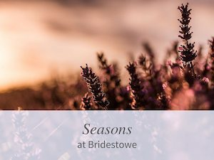 Image Seasons at Bridestowe Lavender Estate