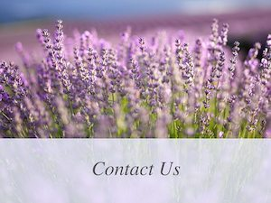 Bridestowe Lavender Estate   Pure Lavender from Tasmania